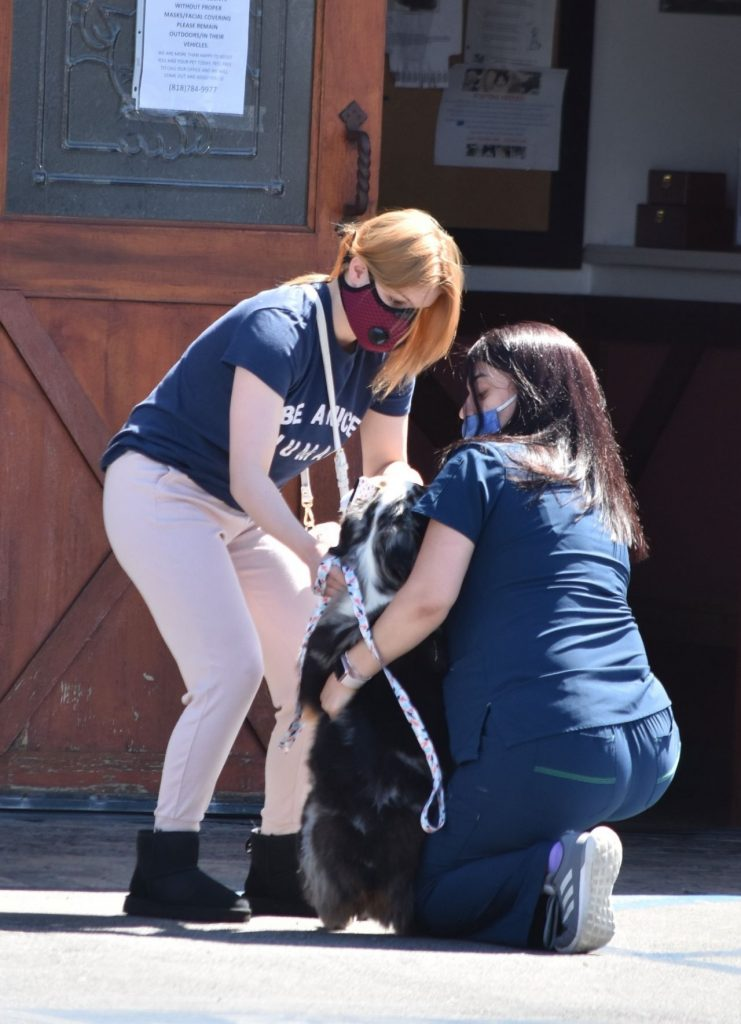 Ariel Winter – Takes Her Dog to a Veterinarian Clinic in Studio City 2020 (13 Photos)